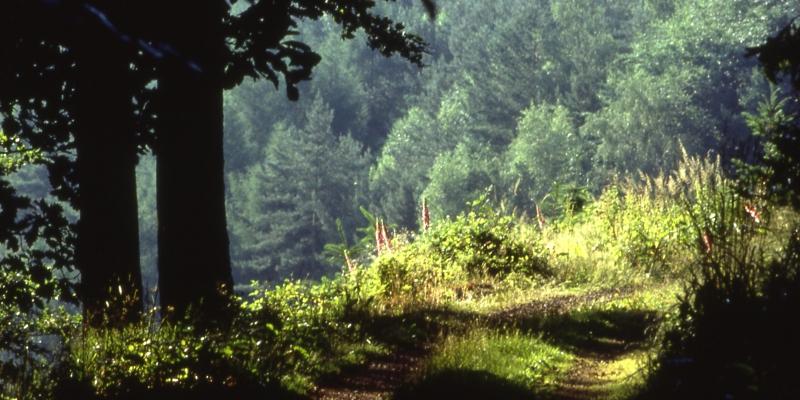 Pfaelzer_Wald7_Suedliche_Weinstrasse_Pfalz